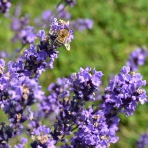 Hobby Biene Füllmaterial